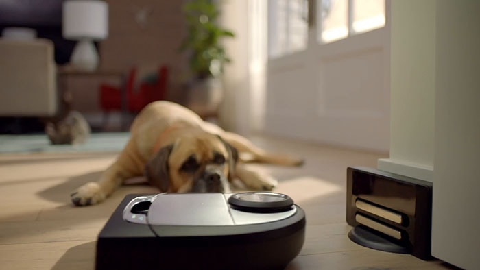 A dog looking at Neato Botvac D7 which drives to it's charging station.